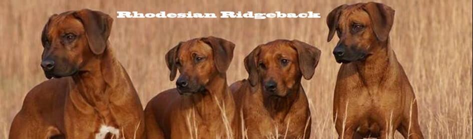 Rhodesian-ridgeback