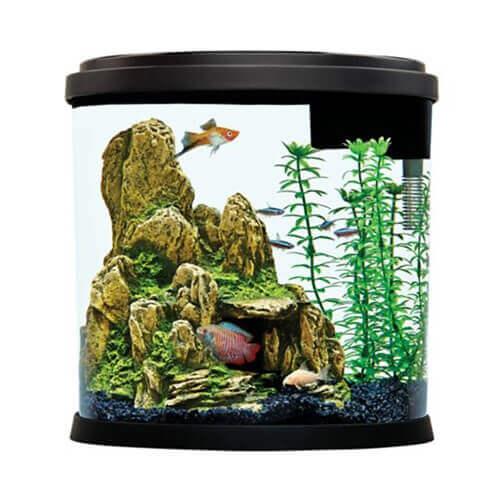 3.5 Gallon Enchant Aquarium