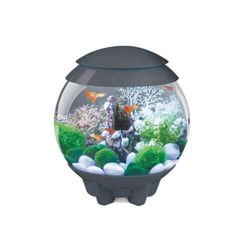 4 Gallon LED Aquarium