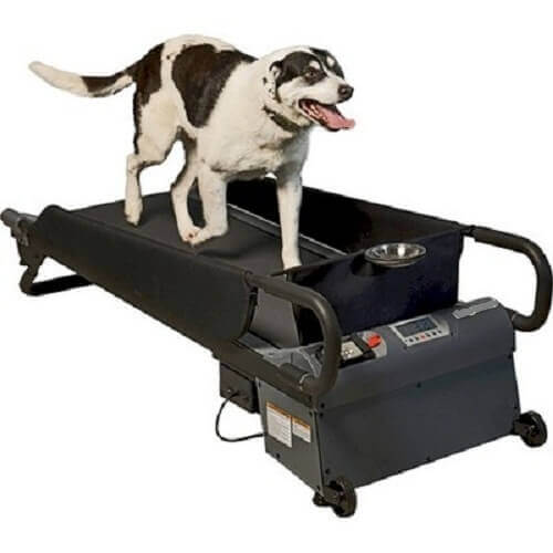 Dog Treadmill Black