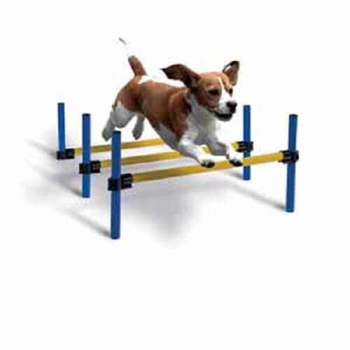 Dog Agility Long Jump