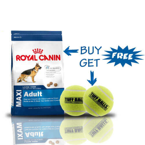 Royal Canin Maxi Adult, 4 kg + Free Petsport Tuff Mint Balls Dog Toys