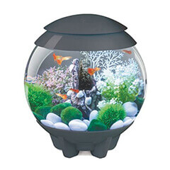 4 Gallon LED Aquarium