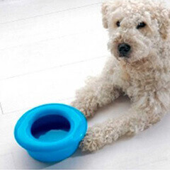 Savic Drinking Water Dog Bowl with Non Splash Rim (Color May Vary)